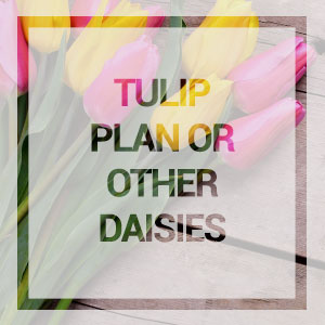 home-Tulip-plan-or-other