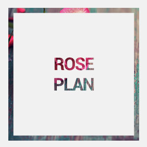 home-rose-plan-hover